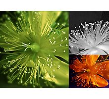 FLORAL COLLAGE Photographic Print