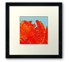 Flame On Island Paradise Framed Print