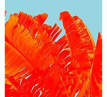 Flame On Island Paradise Photographic Print