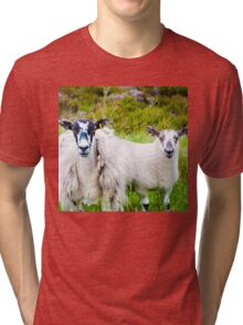 View of English grazing sheep in countryside Tri-blend T-Shirt