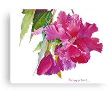 Ruffled Begonia Watercolor Canvas Print