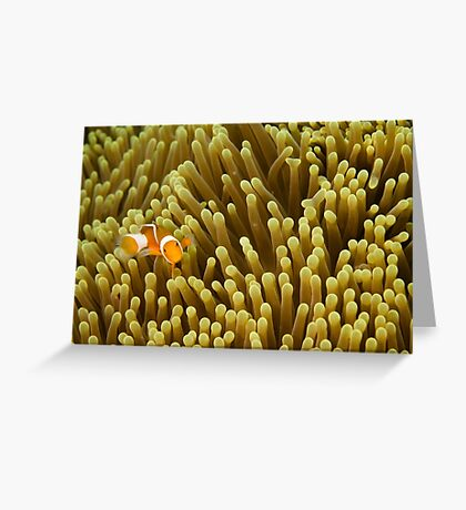 Nemo on Yellow Greeting Card