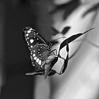 Butterfly  by Margaret Stanton