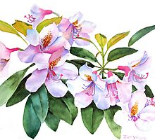 Spring Rhody Watercolor by Pat Yager