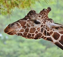 This is my best side by Scott Mitchell