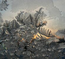 Window Frost by Jeannine St-Amour