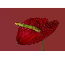 Tail Flower Photographic Print