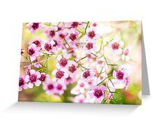 Confetti - Pink Geraldton Wax  Greeting Card