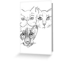 Feline Facial Structures Greeting Card