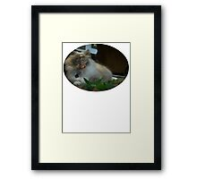 Nic Cage Cat Framed Print