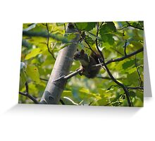 Curious Little Guy Greeting Card