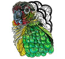 Green Cheeked Conure Photographic Print