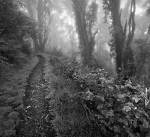 Passage Through the Woods by Richard Mason