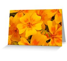 Tagette Blossoms Macro Greeting Card