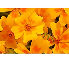 Tagette Blossoms Macro Photographic Print
