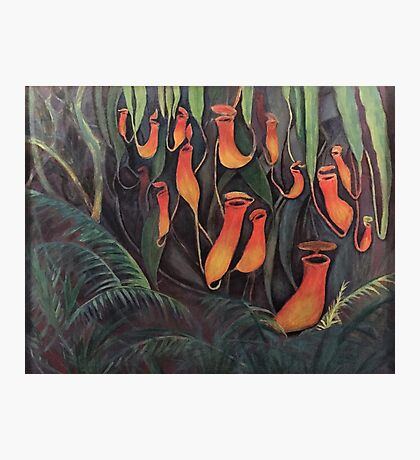 Carnivorous Tropical Pitcher Plant Photographic Print