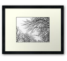 Snowy Limbs Framed Print