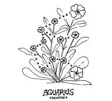 Floral Constellation - Aquarius Photographic Print