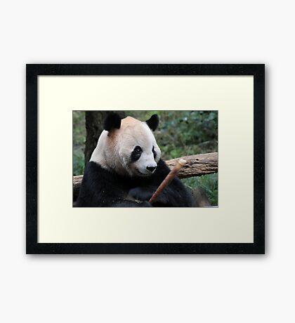 Panda Snack Framed Print