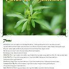 Herbal Calendar Teas- Cover by cdwork