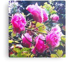 Montsalvat Roses Metal Print