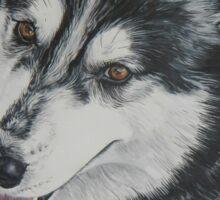 Lexi the husky  Sticker