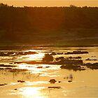 ELEPHANTS RIVER SUNSET - KRUGER by Magaret Meintjes