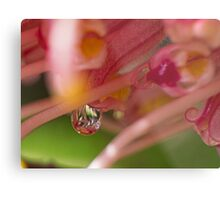 A Sweet Drop Metal Print