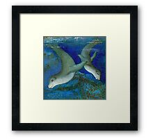 Seal kingdom Framed Print