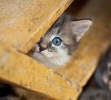 Peek A Boo Kitty by Mythos57