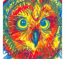 primary color owl Photographic Print