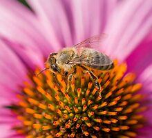Bee Calendar by Mark Bangert