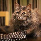 Feather toy by Lynn Starner