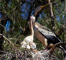 Nesting by BigAndRed