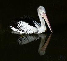 Serene Pelican by Margaret Saheed
