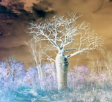 Boab Tree by Mary Jane Foster