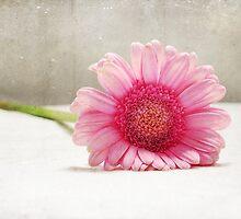 Softness in Pink by Randi Grace Nilsberg