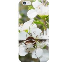 All wings 01 iPhone Case/Skin