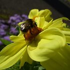 Big Bumble Bee by Babz Runcie