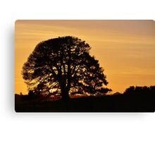 Sleepy Sunset Canvas Print