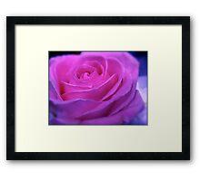 VIVID PINK ROSE Framed Print