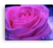 VIVID PINK ROSE Canvas Print
