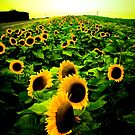 The Sun by Pinhead Industries