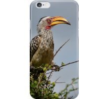 Southern Yellow-billed Hornbill iPhone Case/Skin