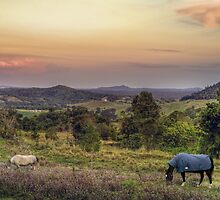 Country Views by Steve Bass
