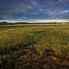 Early Morning around Canberra Race Course (ACT/Australia) (3) by Wolf Sverak