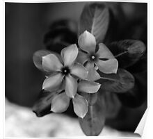 PERIWINKLE Poster