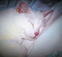 Sleepy puss by ♥⊱ B. Randi Bailey