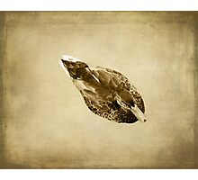 Duck on Brown Photographic Print