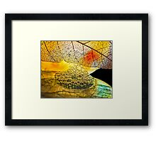Seeds Upon the Field Framed Print